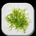 پرورش جلبک