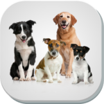 نژادهای سگ