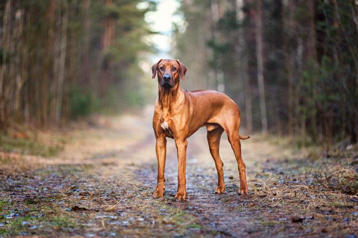 نژادهای سگ های جنوبی