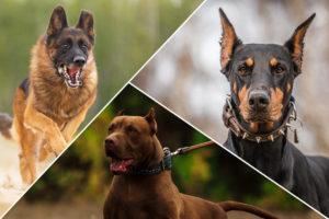 نژادهای سگ های نگهبان