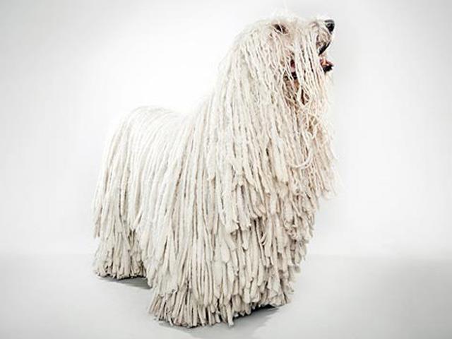 سگ کمندور | Komondor