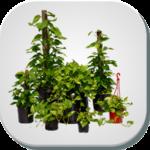 گیاهان گلخانه ای