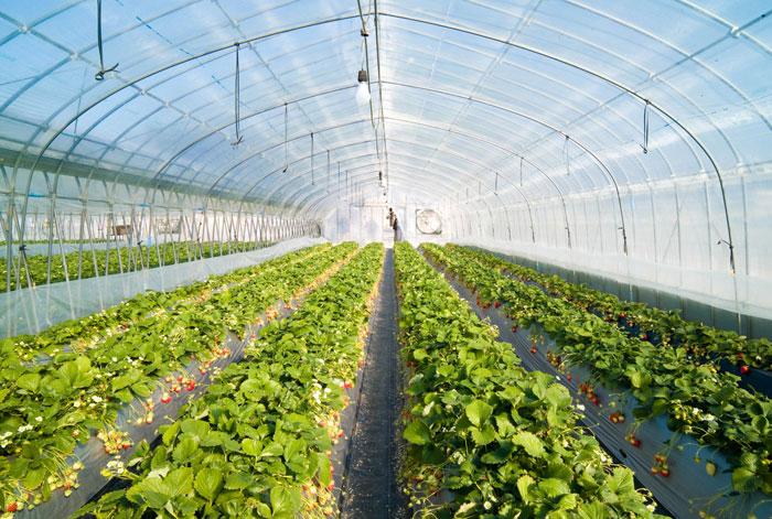 مدیریت تولید در گلخانه