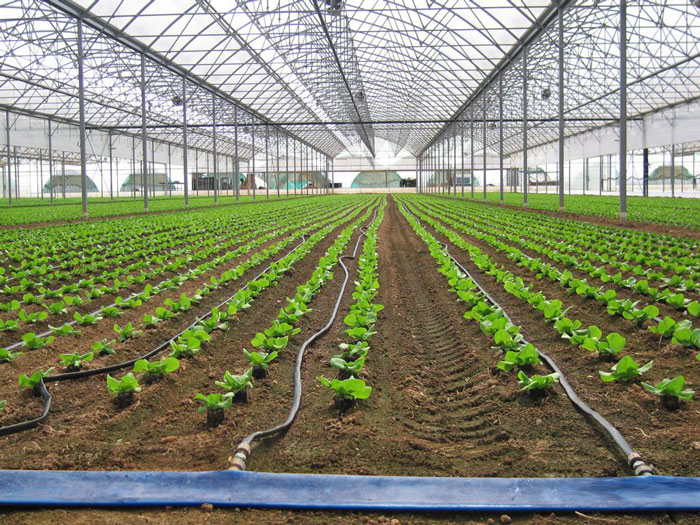 آبیاری محصولات گلخانه ای
