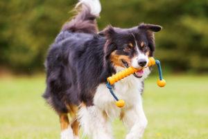 نژادهای سگ ورزشی
