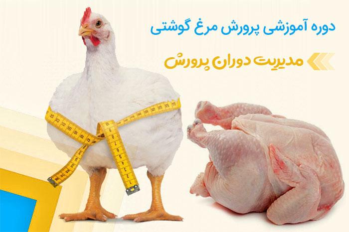 آموزش پرورش مرغ گوشتی | مدیریت دوران پرورش