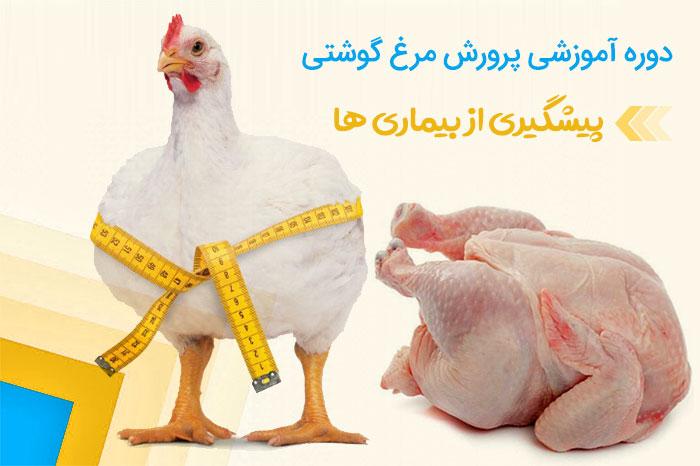 آموزش پرورش مرغ گوشتی | پیشگیری از بیماری ها