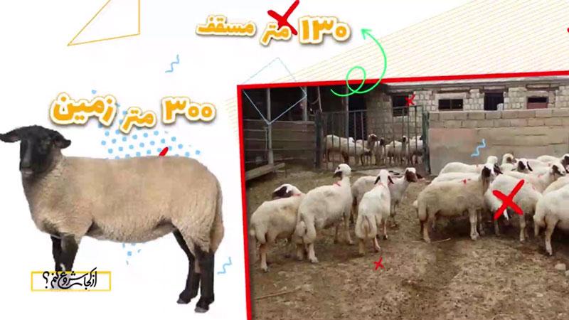 مساخت زمین برای پرورش گوسفند