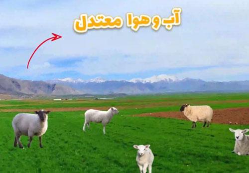 مناطق مناسب پرورش گوسفند