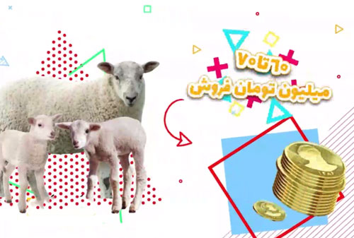 بازگشت سرمایه پرورش گوسفند