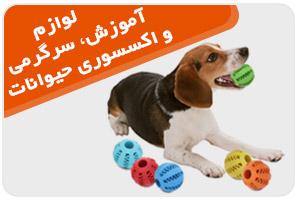 آموزش، سرگرمی و اکسسوری حیوانات